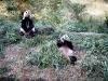 37_pandas