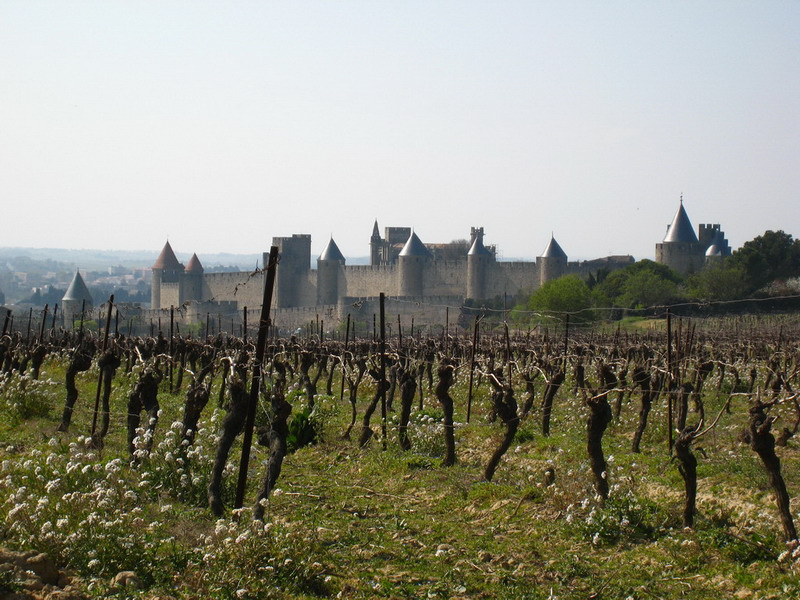 11-Carcassonne_vignes
